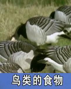 鸟类的食物剧照