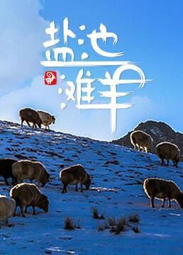 盐池滩羊剧照