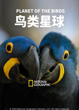 鸟类星球剧照