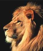 狮王传奇剧照