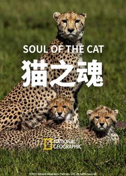 猫之魂剧照