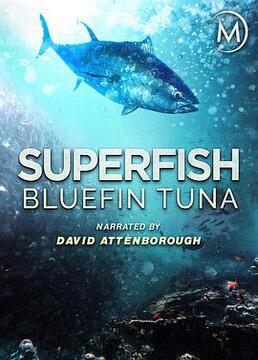 超级鱼类蓝鳍金枪鱼剧照