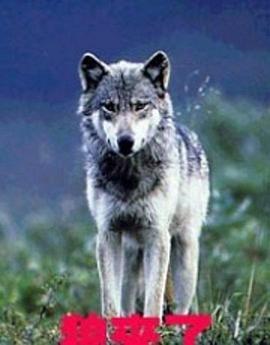 狼来了剧照